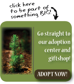 Pinecone Project – Adopt a Tree Program